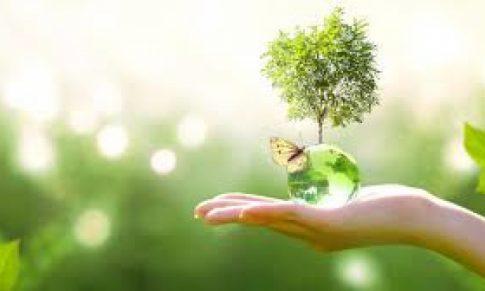 Día Mundial del Medio Ambiente: Una celebración diferente